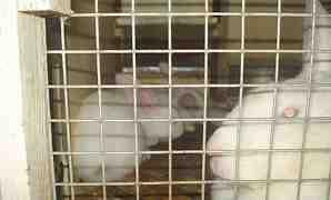 Клетки для содержания кроликов миакро