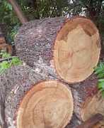 Пеньки дубовые для рубки мяса
