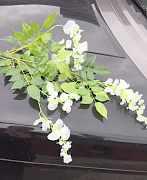 Глициния (искусственные цветы )